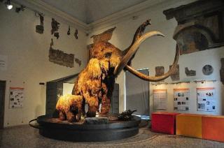 Museo Di Scienze Naturali Caffi
