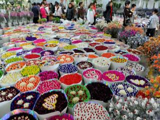 Flowers And Birds Market Of Kunming