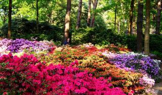 Rhododendronpark Bremen And Botanika
