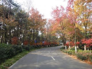 hunan forest botanical garden