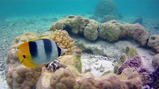 Pure Snorkelling By Reef Discovery