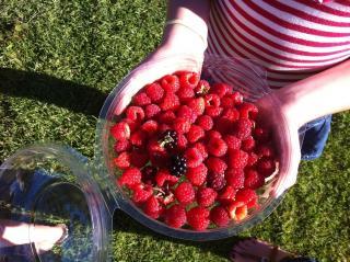 denmark berry farm