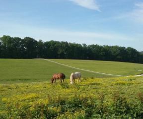 land of little horses