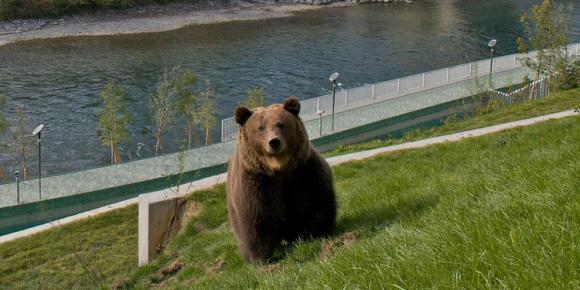 اماكن السياحة في برن سويسرا منتزه بارينغرابين ( حديقة الدب )