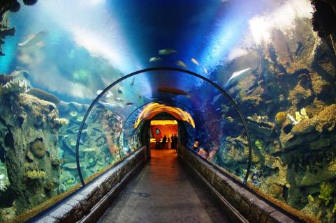 Las Vegas Explorer Pass - Las Vegas Tourist Pass - Save Up to 55% Off.