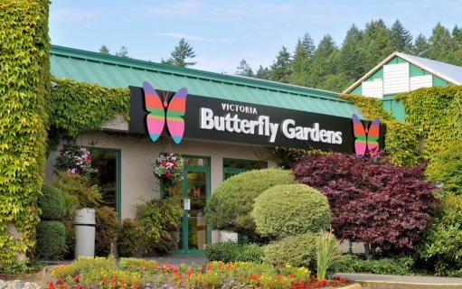 Victoria Butterfly Gardens, Victoria | Ticket Price | Timings ...