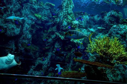 aquarium of the pacific ticket prices