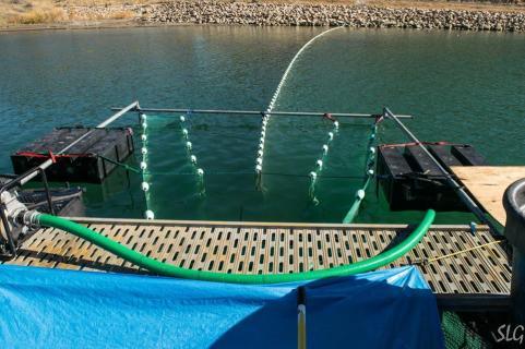 Durango fish hatchery and wildlife museum durango for Durango fish hatchery