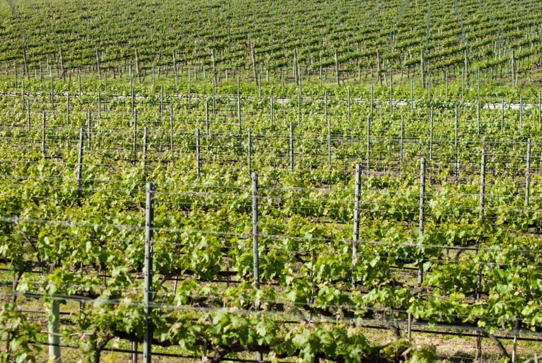 Lucca, Montecarlo And Wine Tasting - Pisa