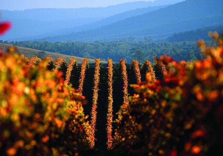 Yarra Valley - Museums And Wineries - Melbourne
