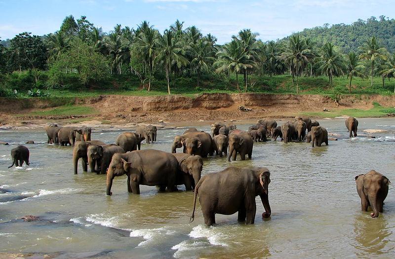 Celebrate Christmas with Elephants - Christmas Holiday