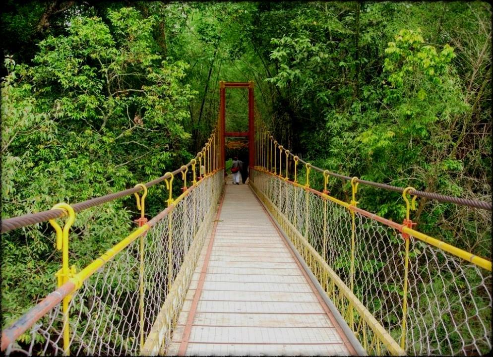weekend getaways near bangalore - Coorg
