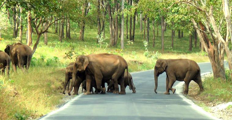 tourist place near Bangalore - Mudumalai