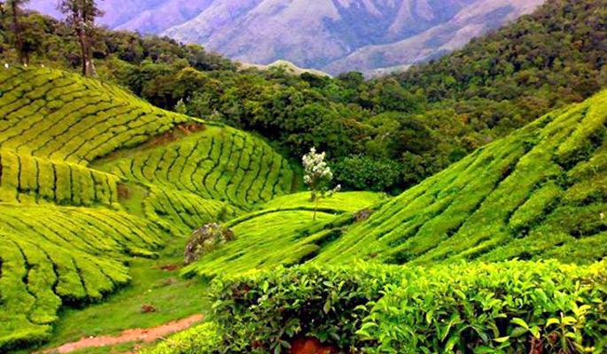 Best Of 4 Days In Coorg (Scotland Of India) : TripHobo ...