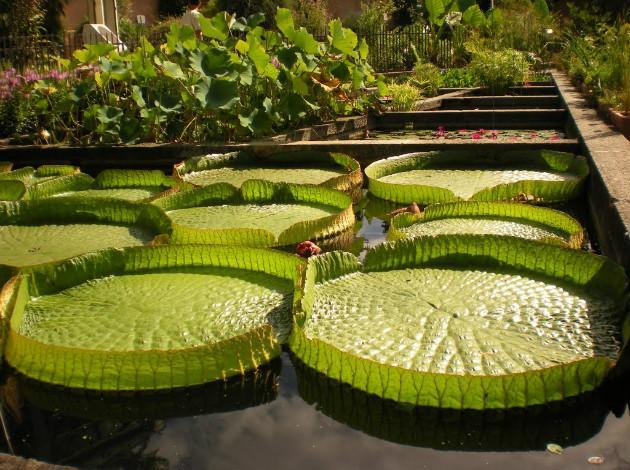 13 best botanical gardens in the world  triphobo
