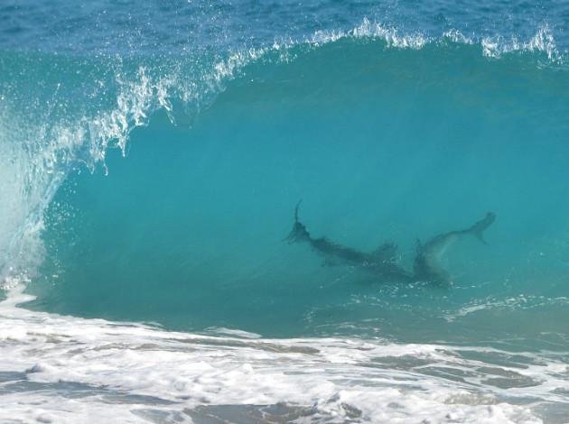 Pictures of bikini atoll testing