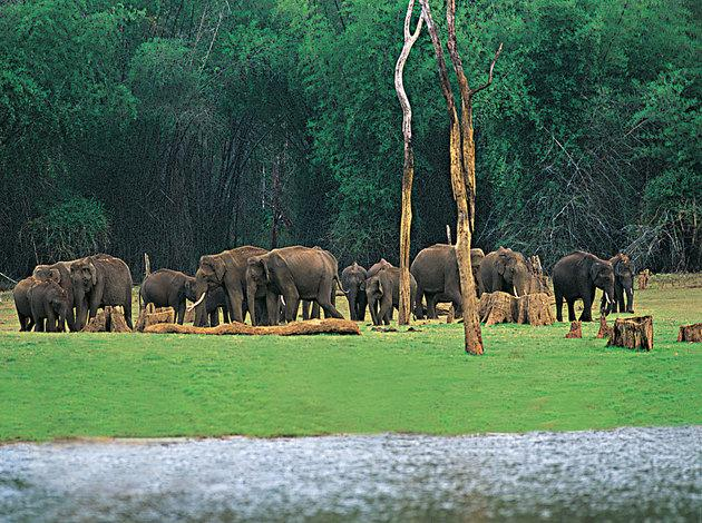 Thekkady -places in kerala to visit for honeymoon