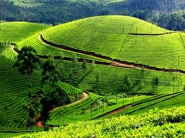 Munnar - best place in Kerala for honeymoon
