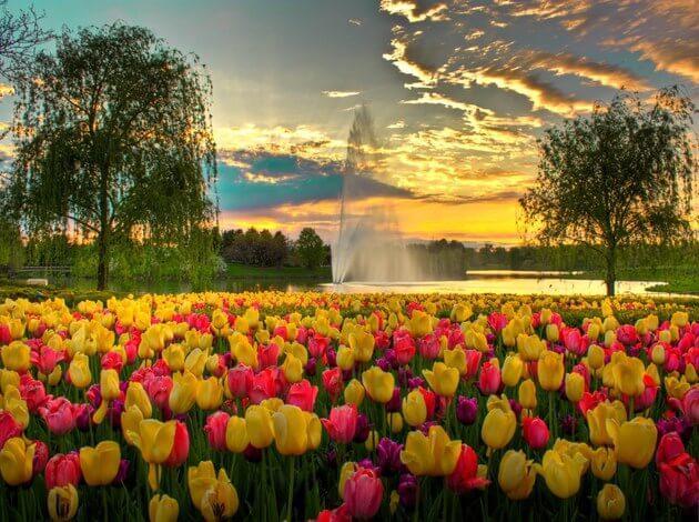 Tulip Festival In Amsterdam Keukenhof TripHobo - Holland tulip festival
