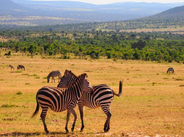 Kenya for Safari adventure