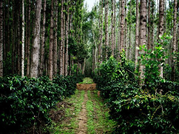 Chikmagalur - within 300 Km from Bangalore