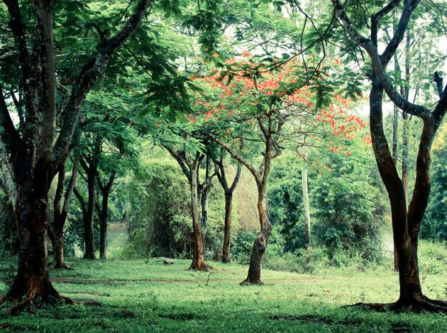 best hill station near Bangalore - Coorg