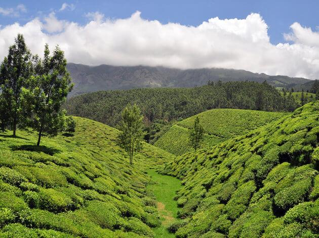 Munnar, most visited hill station close to Bangalore