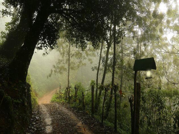 Munnar - a must visit during rainy season
