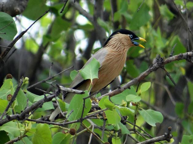Okhla Bird Sanctuary - top monsoon destination near Delhi