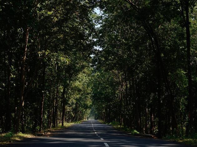 Maredumilli - an unusual monsoon destination near Hyderabad