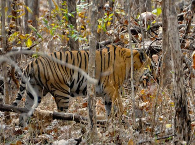 Dandeli- Best known for its wildlife and birdlife