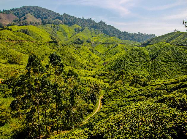 Cameron Highlands - quiet honeymoon place in Malaysia