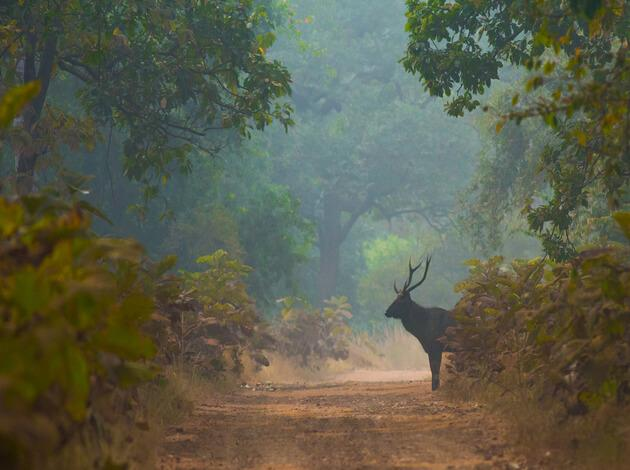 Ecotourism In India The Best Places For A Nature Friendly - 10 ecotourism hotspots for 2016