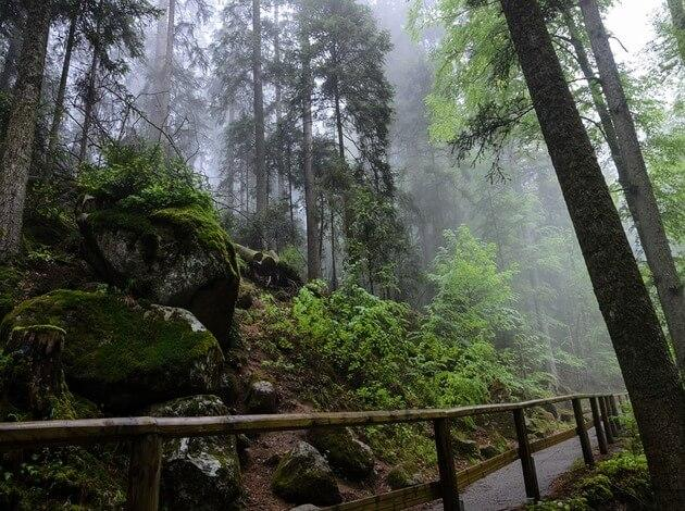 Black Forest - the best german hiking trail