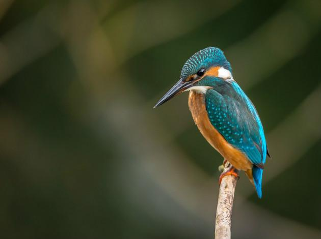 Mayani Bird Sanctuary