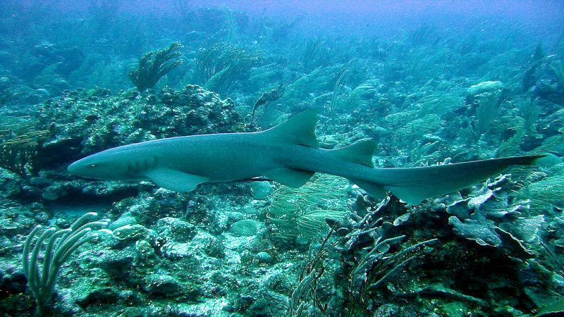 Ambergris Caye - another diving location in Belize