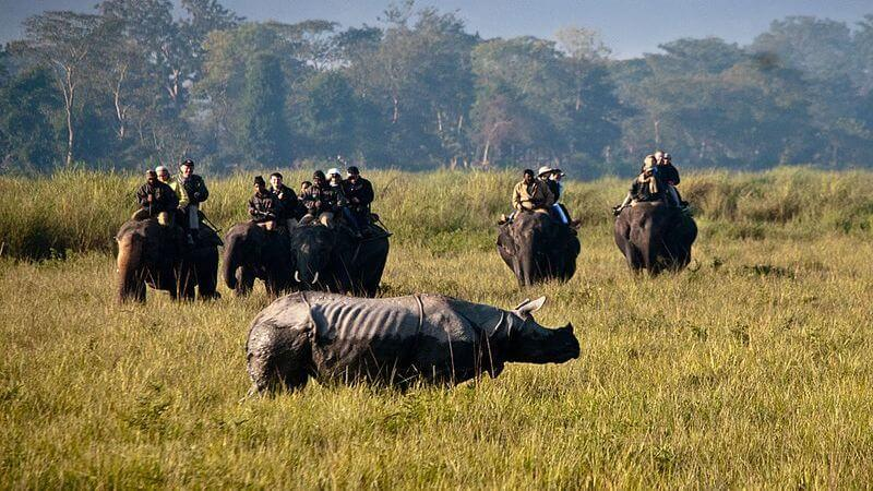 Kaziranga National Park - Places to visit in North East India