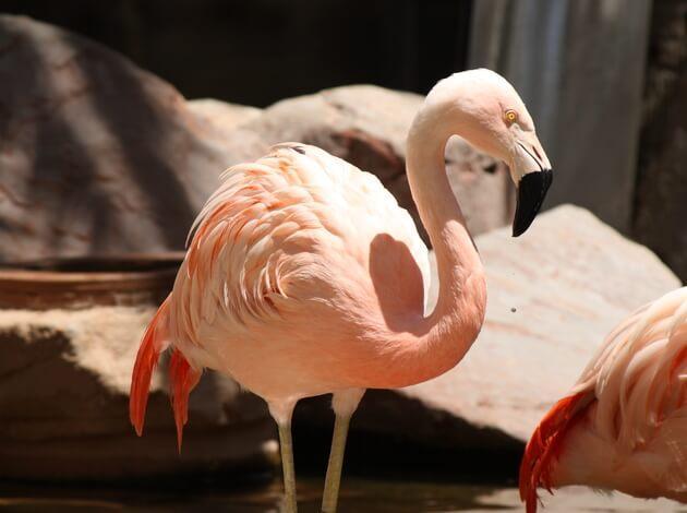 Flamingo Wildlife Habitat