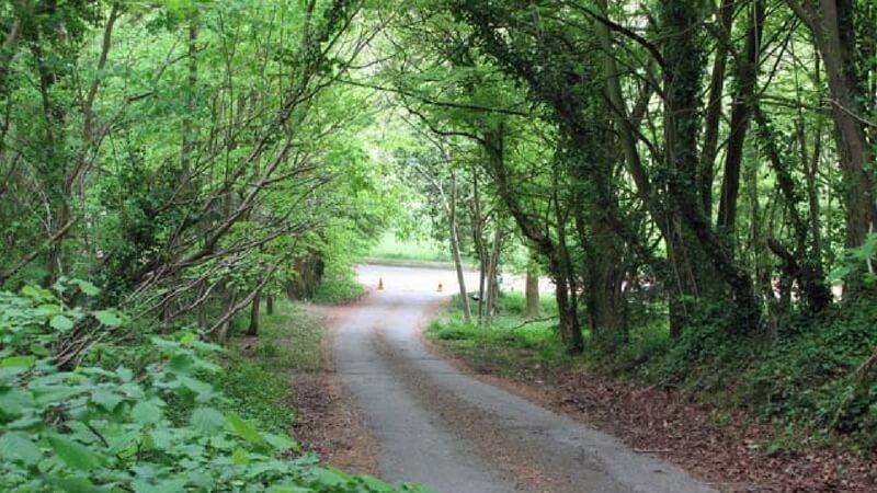 Trails in West Ridge Nature Reserve
