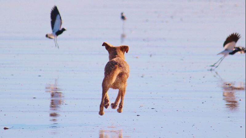 Miramar Beach Ca Dog Friendly