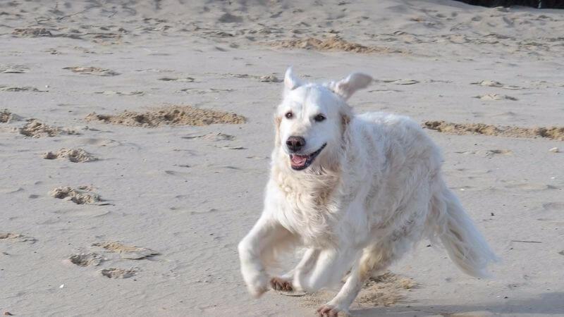 Ocean Beach- Dog Beach