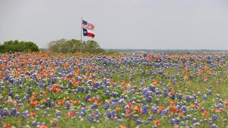 Texas Hill Country Wildflowers, Willow City