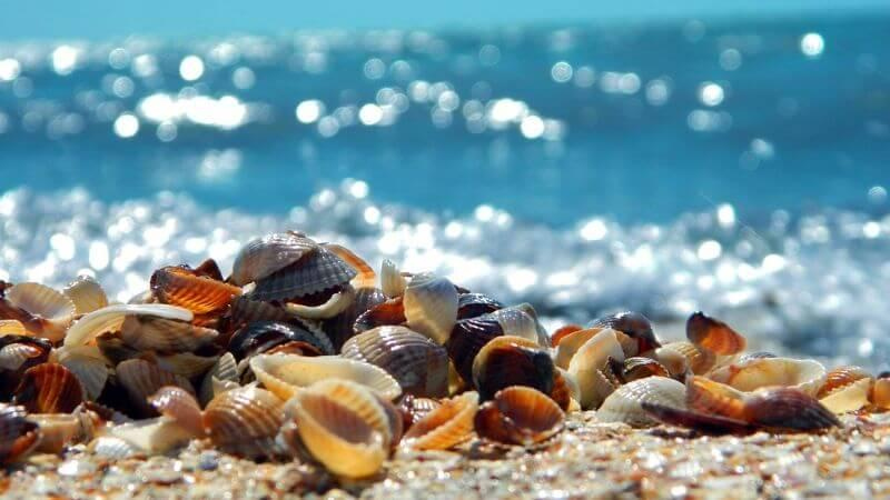 Shelling Beaches In Florida