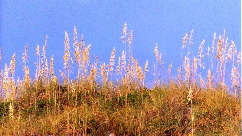 Sand Key Island, Clearwater