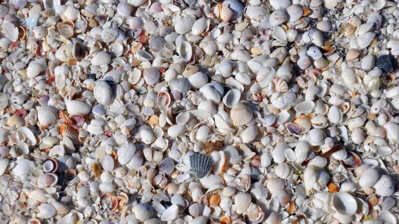 best place in Florida for collecting seashells
