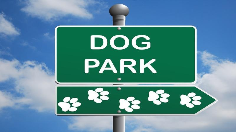 Best Dog Parks in Pittsburgh