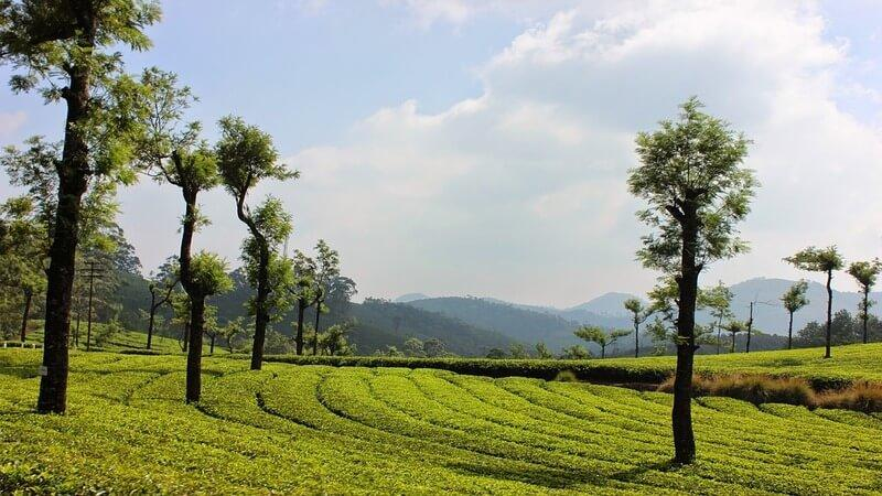 Munnar - hill station to visit in summer