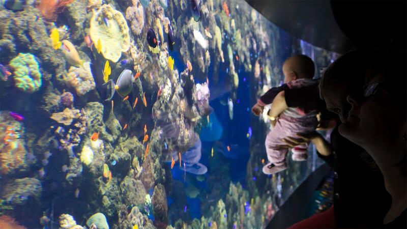 Copenhagen, Denmark - Enjoy marine life with your children