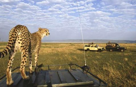 Things to do in Masai Mara