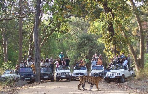 Experience Bandhavgarh National Park via City Map